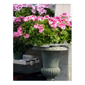 Geraniums Planter Postcard