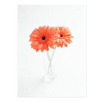 Gerbera Daisies Orange Post Card
