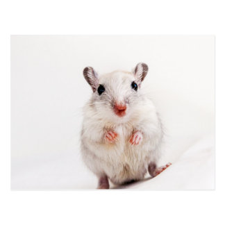 Gerbil Baby Animal Cute Pet Gerbils Template Postcard