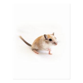 Gerbil Cute Baby Animal Pet Gerbils Template Postcard