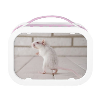 Gerbil standing yubo lunchboxes
