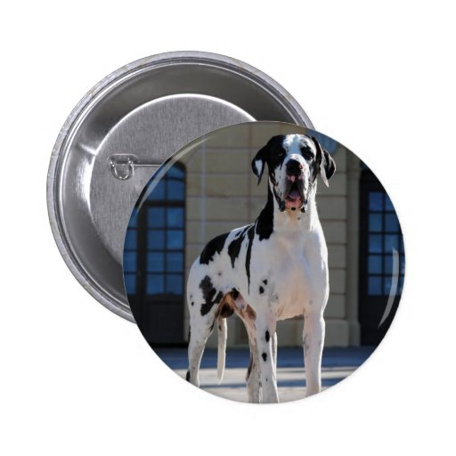 German Dogge, great dane, Hunde, Dogue Allemand Button