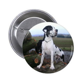 German Dogge, great dane, Hunde, Dogue Allemand Buttons