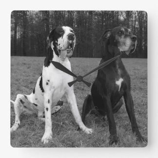 German Dogge, great dane, Hunde, Dogue Allemand Square Wallclocks