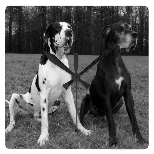 German Dogge, great dane, Hunde, Dogue Allemand Square Wallclocks