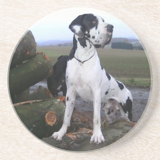 German Dogge, great dane, Hunde, Dogue Allemand Coasters