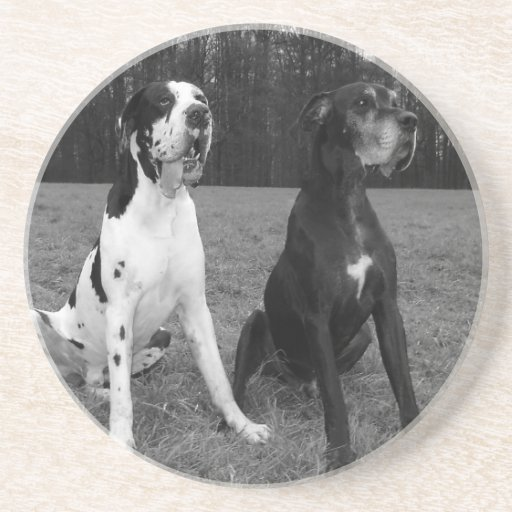 German Dogge, great dane, Hunde, Dogue Allemand Drink Coasters