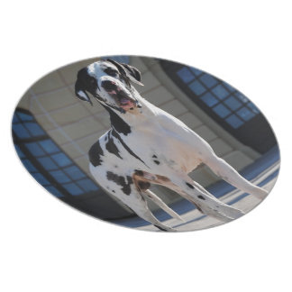 German Dogge, great dane, Hunde, Dogue Allemand Dinner Plate