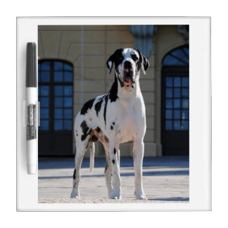 German Dogge, great dane, Hunde, Dogue Allemand Dry Erase Board