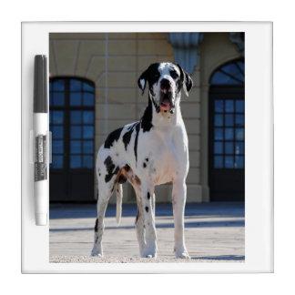 German Dogge, great dane, Hunde, Dogue Allemand Dry Erase Board