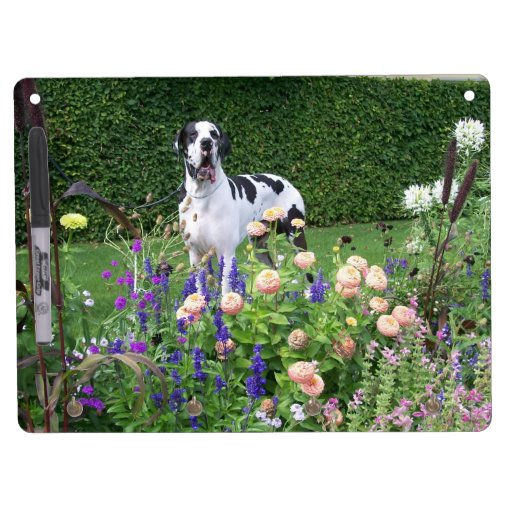 German Dogge, great dane, Hunde, Dogue Allemand Dry Erase Whiteboard