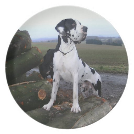German Dogge, great dane, Hunde, Dogue Allemand Dinner Plates