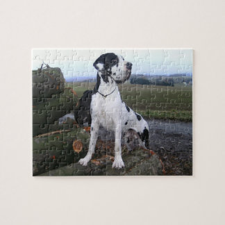 German Dogge, great dane, Hunde, Dogue Allemand Puzzle