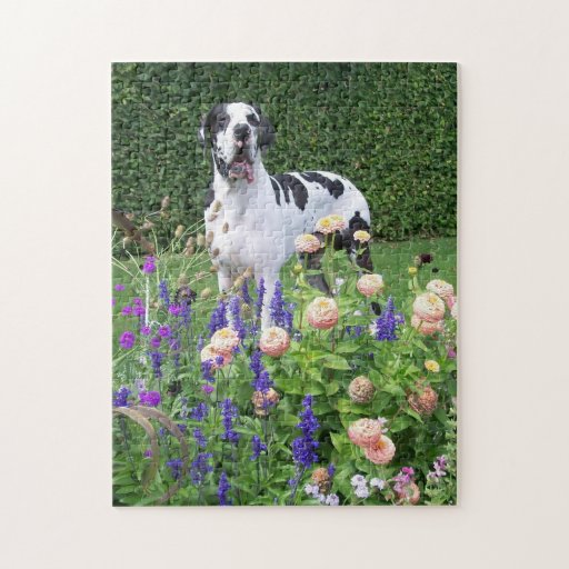 German Dogge, great dane, Hunde, Dogue Allemand Jigsaw Puzzle