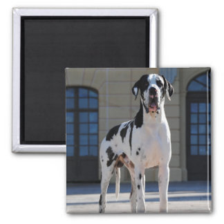 German Dogge, great dane, Hunde, Dogue Allemand Square Magnet