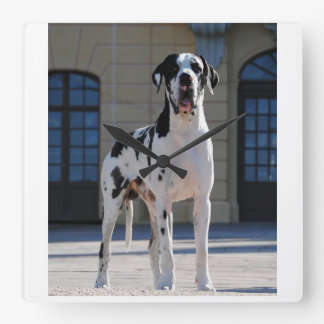 German Dogge, great dane, Hunde, Dogue Allemand Square Wall Clock