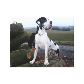 German Dogge, great dane, Hunde, Dogue Allemand Stretched Canvas Prints