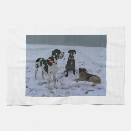 German Dogge, great dane, Hunde, Dogue Allemand Kitchen Towels