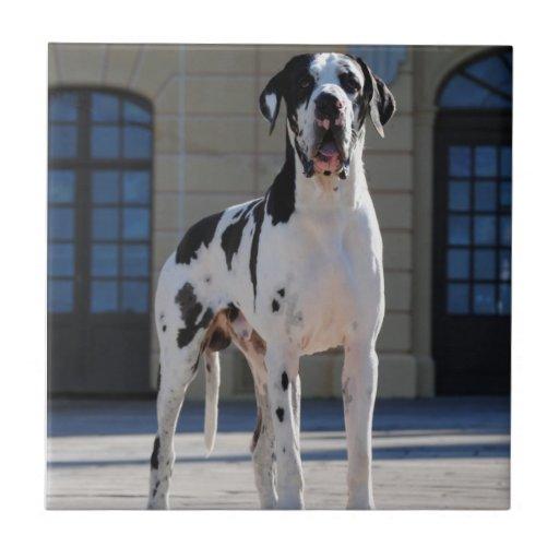 German Dogge, great dane, Hunde, Dogue Allemand Tiles