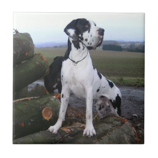 German Dogge, great dane, Hunde, Dogue Allemand Ceramic Tiles