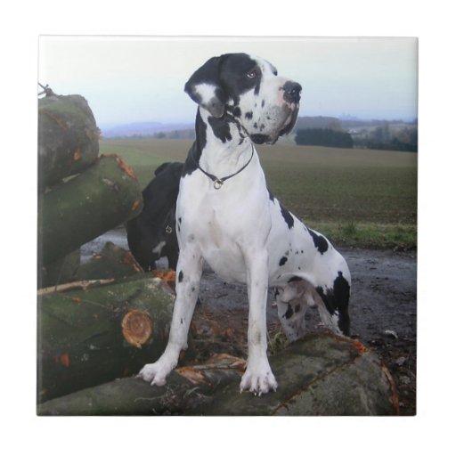 German Dogge, great dane, Hunde, Dogue Allemand Ceramic Tiles