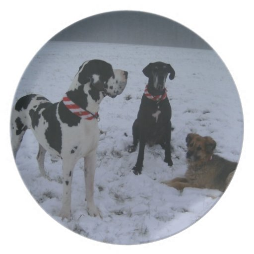 German Dogge, great dane, Hunde, Weihnachten Dinner Plates