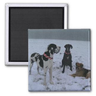 German Dogge, great dane, Hunde, Weihnachten Square Magnet