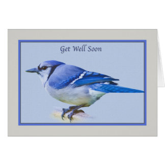 Get Well Card with Blue Jay Bird