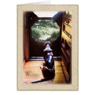 Get well soon  -Basset Hound Greeting Card