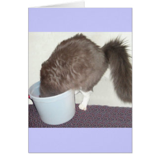 Get Well Soon Cat Greeting Card