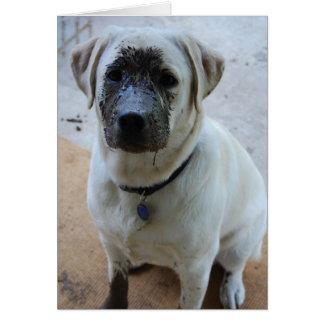get well soon puppy card