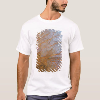 Giant gorgonian sea fan (Plexauridae sp.) T-Shirt