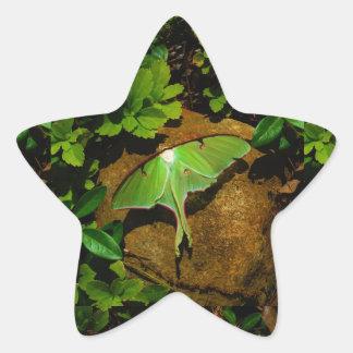 Giant Green Luna moth Star Sticker
