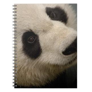 Giant panda (Ailuropoda melanoleuca) Family: 2 Notebook