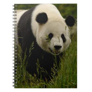 Giant panda (Ailuropoda melanoleuca) Family: Spiral Notebook