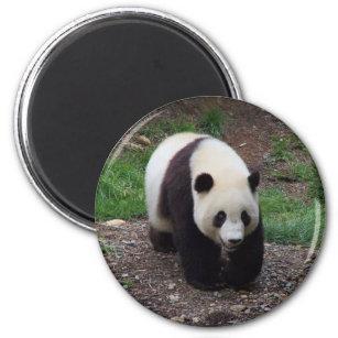 Giant Panda Photo Circle Magnet