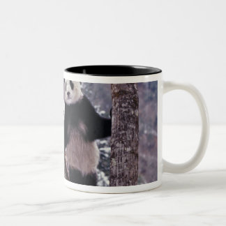Giant Panda standing on tree, Wolong, Sichuan, Two-Tone Coffee Mug