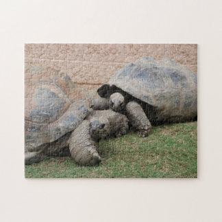 giant tortoises jigsaw puzzle