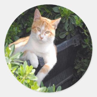 Ginger and White Cat Classic Round Sticker