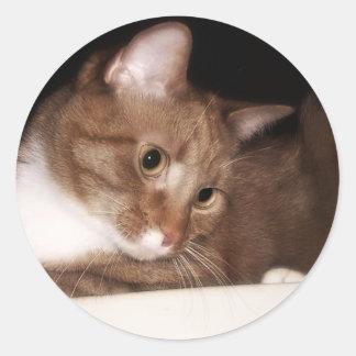 Ginger Cat in Soft Light Classic Round Sticker