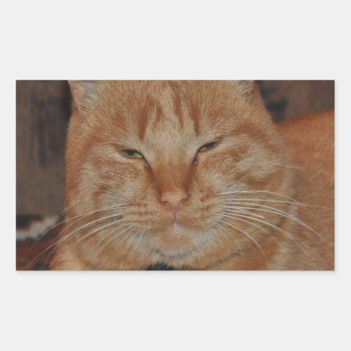 ginger cat relax peace calm & joy rectangle sticker