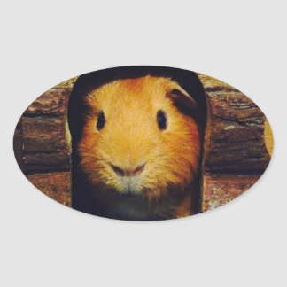 Ginger Guinea Pig Gifts Oval Sticker