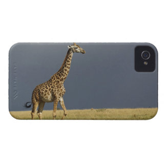 Giraffe and stormy sky, Giraffa camelopardalis iPhone 4 Covers