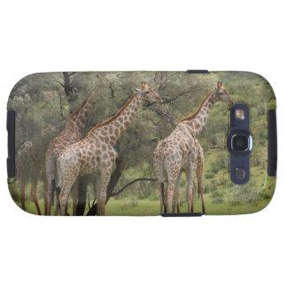 Giraffe, Giraffa camelopardalis, Kgalagadi 2 Samsung Galaxy SIII Covers