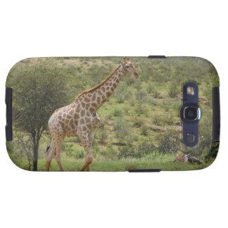 Giraffe, Giraffa camelopardalis, Kgalagadi Galaxy S3 Case