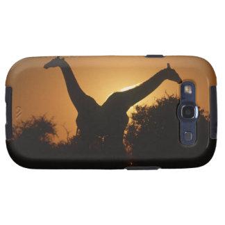 Giraffe (Giraffa camelopardalis) Pair Samsung Galaxy S3 Cases