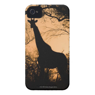 Giraffe (Giraffa camelopardalis) silhouette iPhone 4 Cases