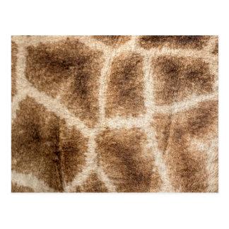 Giraffe pattern postcard