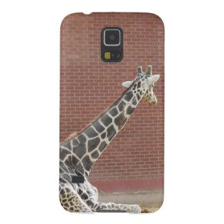 Giraffe Relaxing Samsung Case