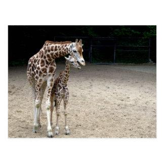 Giraffe with child postcard